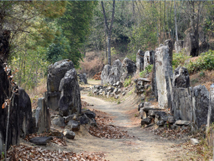 Megaliths line the paths from the villages to the fields in Nagaland, commemorating their builders.